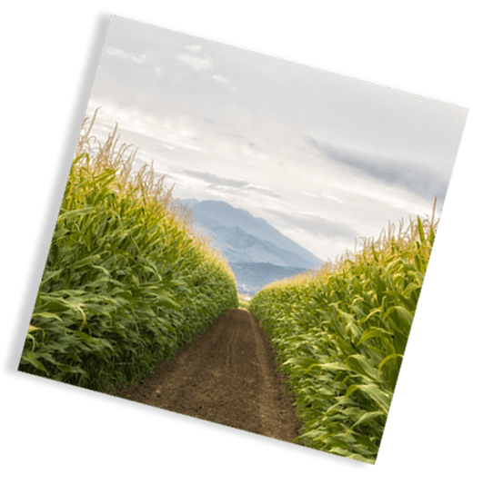 corn square - Medical Conditions